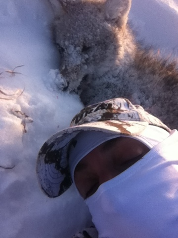 Hunting Coyotes in the rut. 3