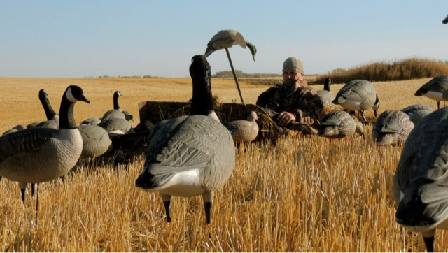 Birdtail Waterfowl Inc. and Avery Decoys 3