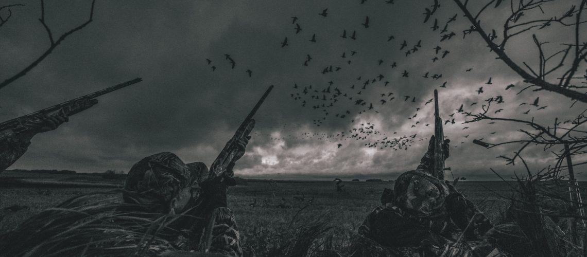 Birdtail Fury